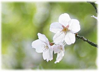 「薄桜記」 その後♪