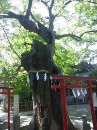 五月満月(ウエサク)祭スペシャルヒーリング&瞑想の感想