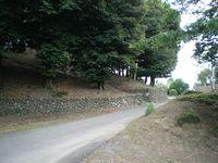 タヌキの通り道を・・・
