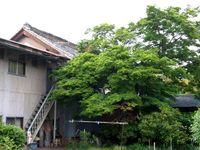 夏の蔵人(くらんど) 箕郷町