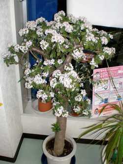 金のなる木に花が咲く