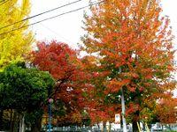 とある団地に秋が来た