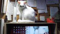 ストーカー猫ミヤーン