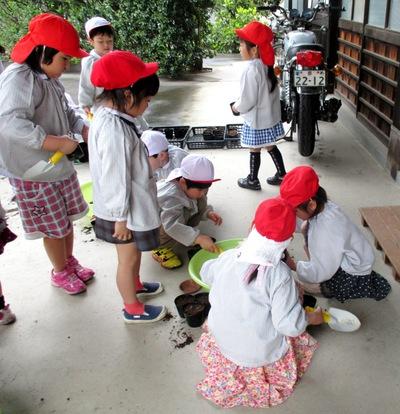幼稚園のおともだちに種まきしてもらいました♪