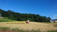 稲刈り終了〜