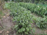 元気な野菜になるための正しい成長のしかた