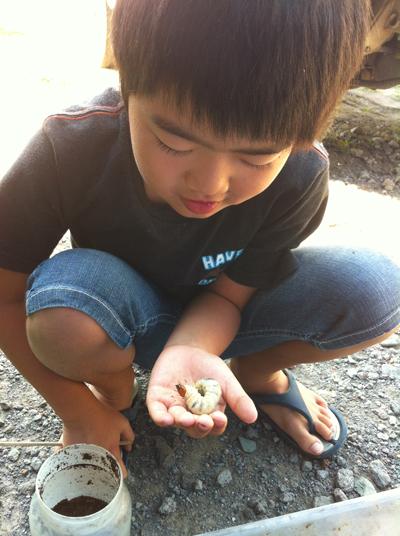 オオクワガタの幼虫(エサ交換の巻)