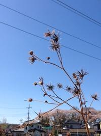 バカと呼ばれる植物
