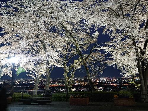 『観音様と夜桜☆』