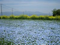 鼻高展望花の丘・菜の花祭り