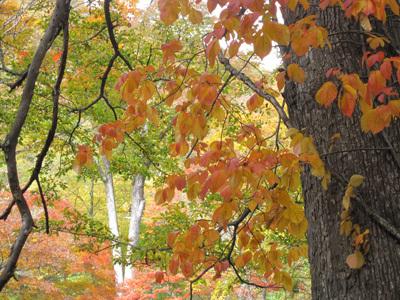 紅葉の高山へ