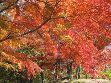 大塩湖の紅葉