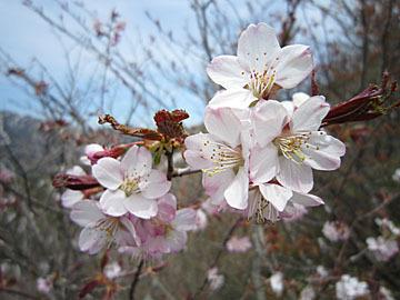 白砂山で出会った花たち