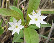 烏帽子岳・湯の丸山で出会った花たち