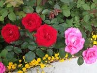 mitukuni薔薇園