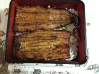 安中鮨豊で鰻