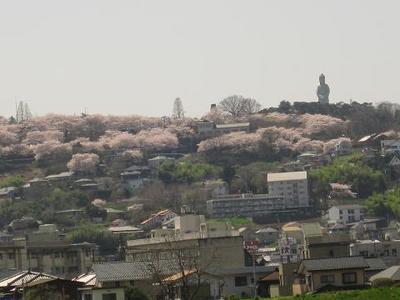『観音様と桜♪』