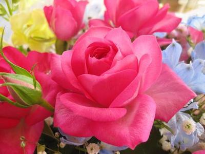 『ふんわり香るバラのロールケーキ♪』
