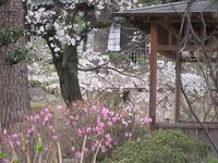 前橋公園・臨江閣(日本庭園)