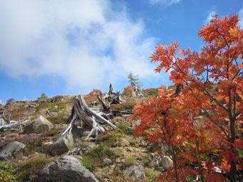 草津白根山・芳ヶ平の紅葉 1