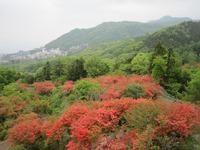 長峰自然公園のヤマツツジ