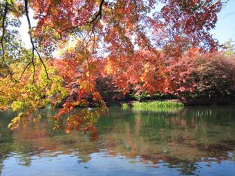 軽井沢・雲場池の紅葉