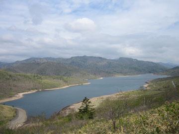 野反湖とシラネアオイ