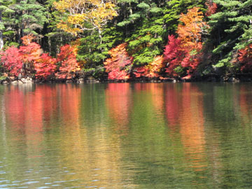 白駒池の彩り 2