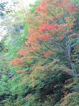 「照葉峡」の紅葉