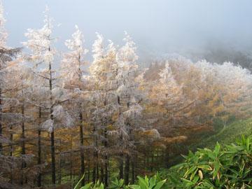 烏帽子岳・湯の丸山☆紅葉と霧氷 1