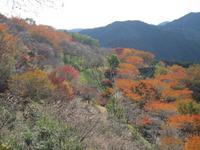 桜山公園/冬桜と紅葉