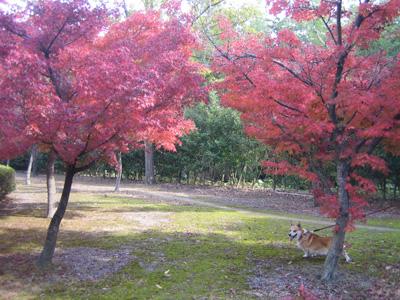 富岡市もみじ平総合公園の散歩