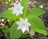 湯の丸山・烏帽子岳で出会った花