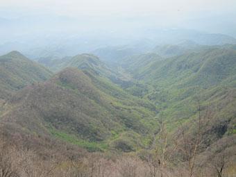 赤城山・駒ケ岳のアカヤシオ