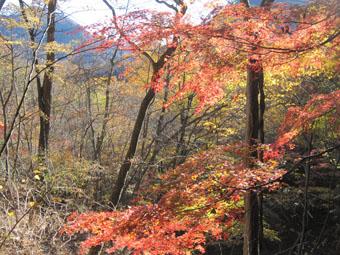 裏妙義・谷急山の紅葉 3