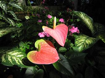 高崎市染料植物園内の温室