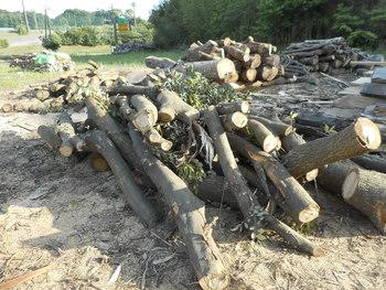 原木の状況