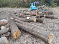 薪用原木の搬入