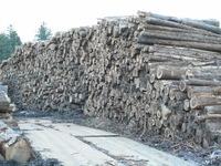 新鮮な薪用原木を・・・