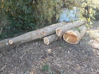 薪用原木の現調