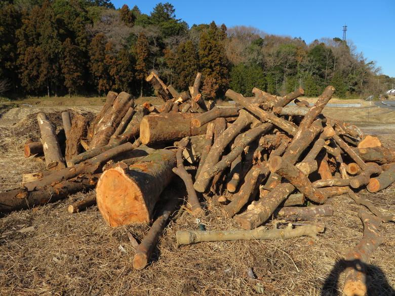 薪原木入荷