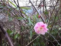 咲いてる(^-^)v