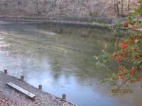 小野池の初氷