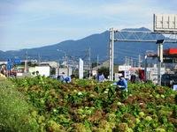 中村で除草作業
