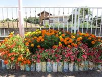 幼稚園の花