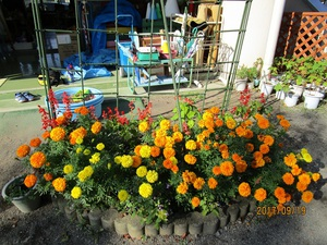 花の駅小野池のアナベル