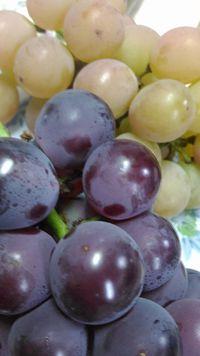 食欲の秋、美味しいフルーツ