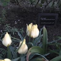 昨日の蕾 今日は咲いてる