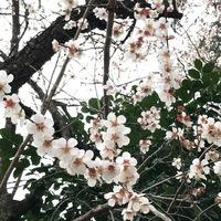 梅の花 2020/03/04 13:16:49