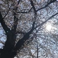 なごみさんぽ 2018/03/27 12:41:43